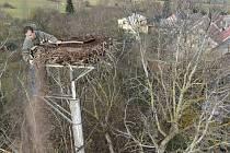 Údržba a úprava hnízda čápa bílého u manželů Hrubých v Chodově.