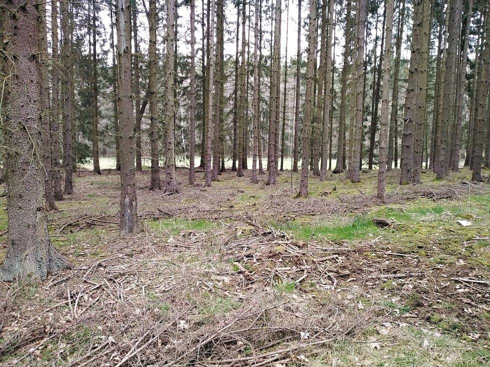 Les nedaleko Bezděkovského potoka.