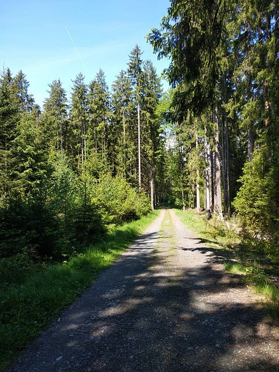 Lesy na Domažlicku.