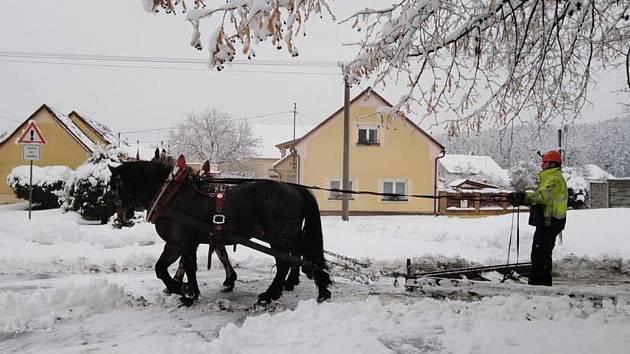 Úklid sněhu koňmi taženým pluhem ve Štichově, foceno při sněhové nadílce leden/únor 2019.