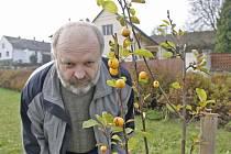 Starosta Josef Janeček u nově vysazené jabloně.