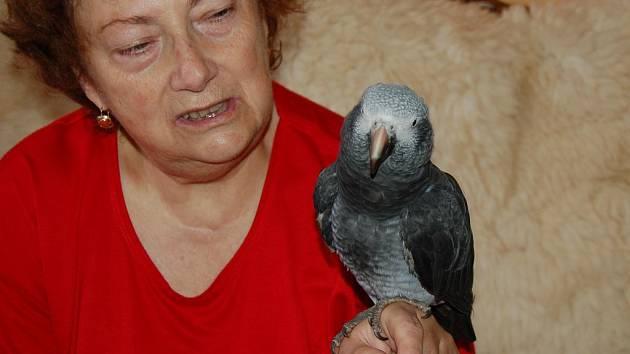 Vlasta Panošová se svým papouškem Žakem.