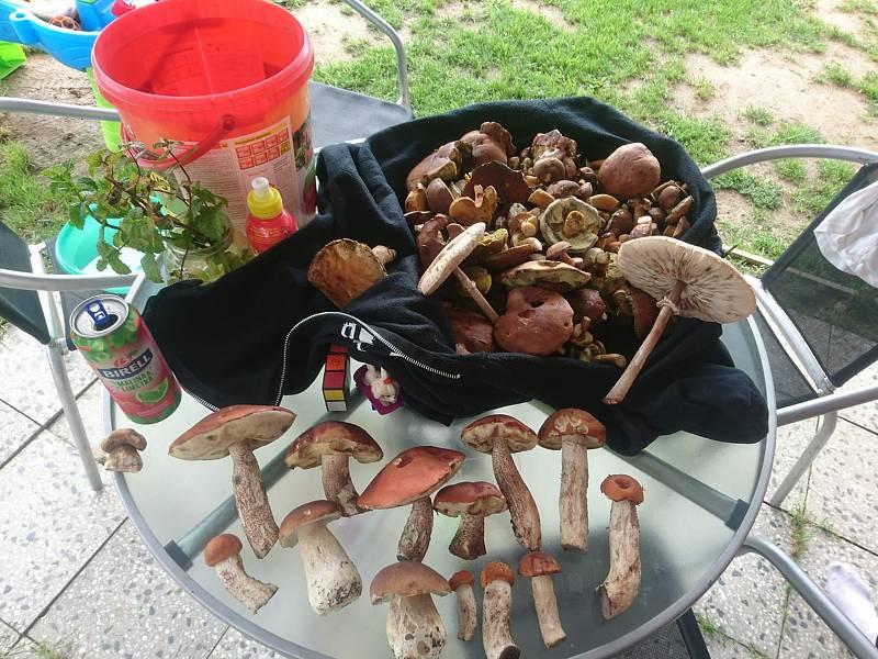 Nalezené houby zaslali: Patrick Růžek