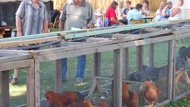 Chovatelská výstava mláďat drůbeže, holubů a králíků se konala v Meclově.