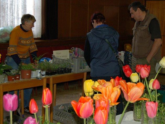 Jarní výstava květin ve Staňkově.