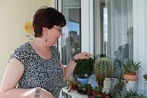 Helena Laznová se svými kaktusy. Má jich už přes 100.