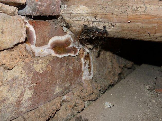 Dřevomorka v útrobách horšovskotýnského zámku.