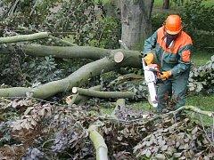 Kácení stromů. Ilustrační foto