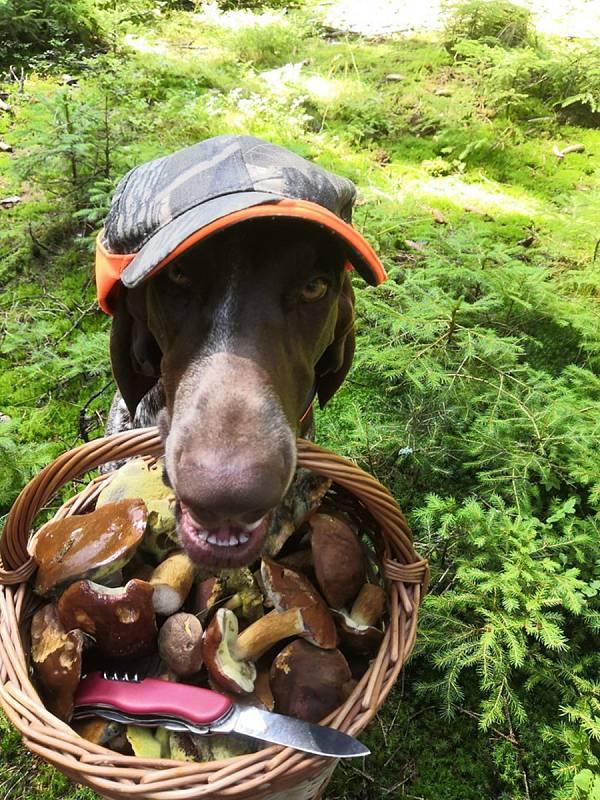 Nalezené houby zaslali: Martin Navrátil