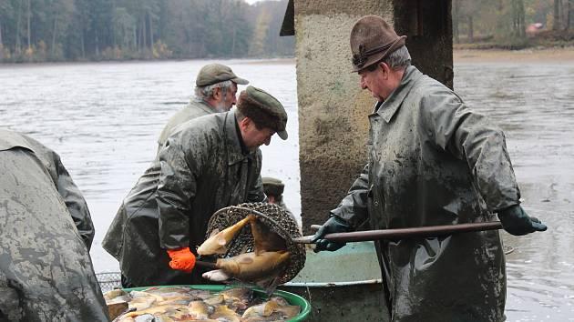 Výlov Černého rybníku a prodej ryb.