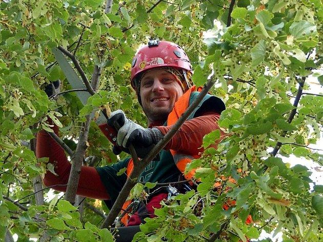 """""""Tenhle strom dosazený do aleje měl být ošetřený už dávno,"""" řekl nám arborista."""