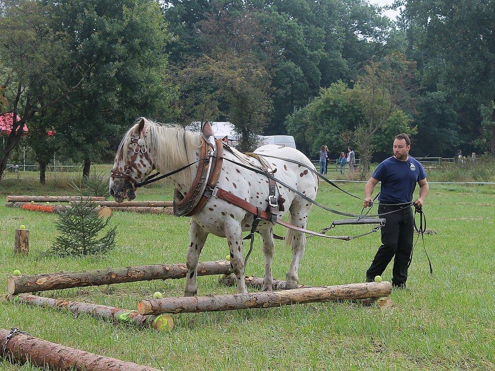 Na Den Českého lesa dorazily stovky návštěvníků. Největší pozornost budil závod chladnokrevných koní. Na snímku je Jiří Foist s hřebcem Narexem.