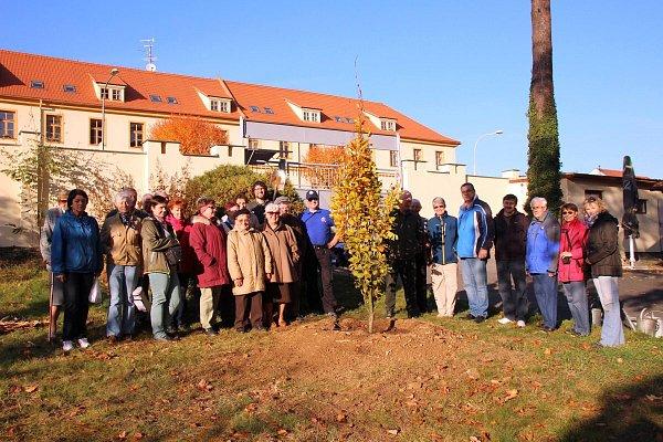 Výsadba stromu vletním kině vDomažlicích.
