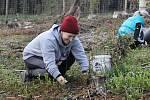 Vysazovat stromky do vykáceného lesa ve Kdyni přišlo 14 dobrovolníků.