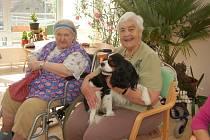 ARČÍK. Pes pomáhá během roku v rámci canisterapie seniorům i dětem, na Silvestra by pomoc potřeboval sám.