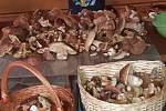 Nalezené houby zaslali: Dominika Zabavíková