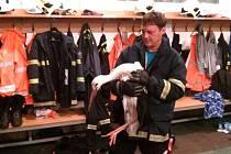 Čáp našel dočasný azyl v hasičské zbrojnici.