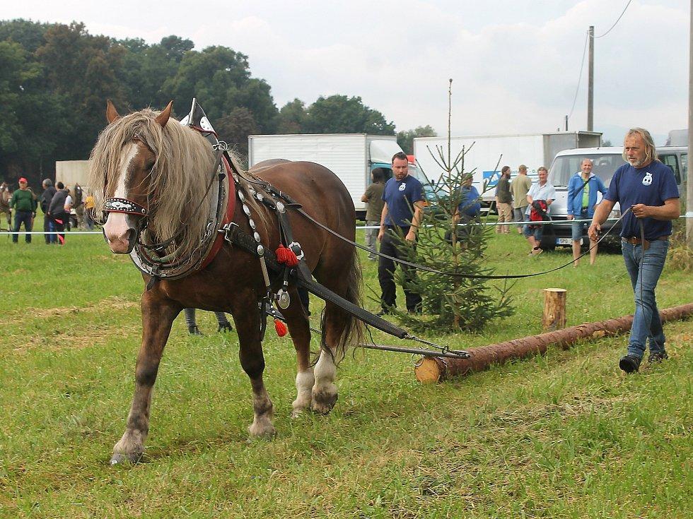 Na Den Českého lesa dorazily stovky návštěvníků. Největší pozornost budil závod chladnokrevných koní. Na snímku je Josef Svoboda s hřebcem Gustonem Developerem.