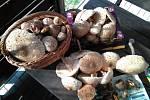 Nalezené houby zaslali: Jarka Franková