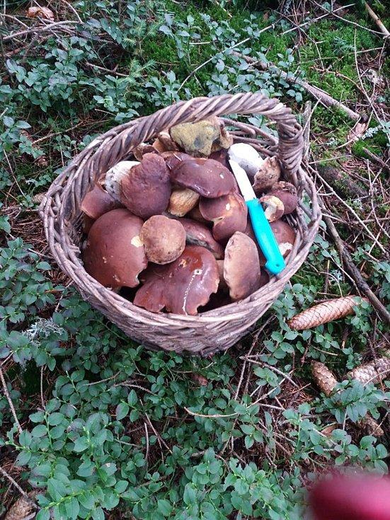 Nalezené houby zaslali: Lenka Boudová
