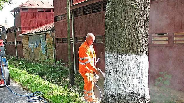 Pracovníci SÚS Domažlice právě opatřují stromořadí kolem silnice I. třídy bílým bezpečnostním nástřikem.