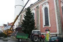 Vánoční strom umístili pracovníci Domažlických technických služeb na prostranství u kašny v úterý dopoledne.