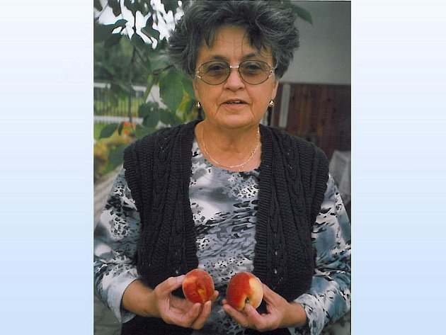 BROSKVÍM SE U HOFFMANNŮ V MRÁKOVĚ DAŘÍ. Radost z nich má nejen Alois Hoffmann, ale i jeho manželka Anna, se kterou je již 53 let.