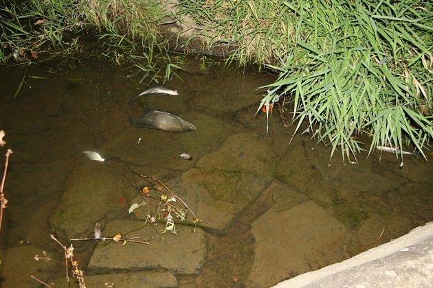 Uhynulé ryby v zámeckém rybníku.