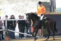 Trh koní se už potřetí konal ve Svržně.
