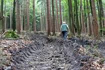 Z místa těžby dříví harvestorem v haltravských lesích.