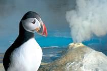 Papuchalk je jedním z živých symbolů Islandu. Tito mořští ptáci vypadají jako kříženci papouška a tučňáka a se svým věčně smutným pohledem jsou roztomilými miláčky Islanďanů i návštěvníků.