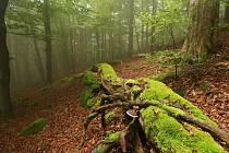 Přírodní rezervace Pleš chrání horský bukový prales, suťové javořiny a svahové bučiny, typické pro Český les. Území na vrcholu Velký Zvon je zvláště chráněno 90 let, a to od 14. listopadu 1931.