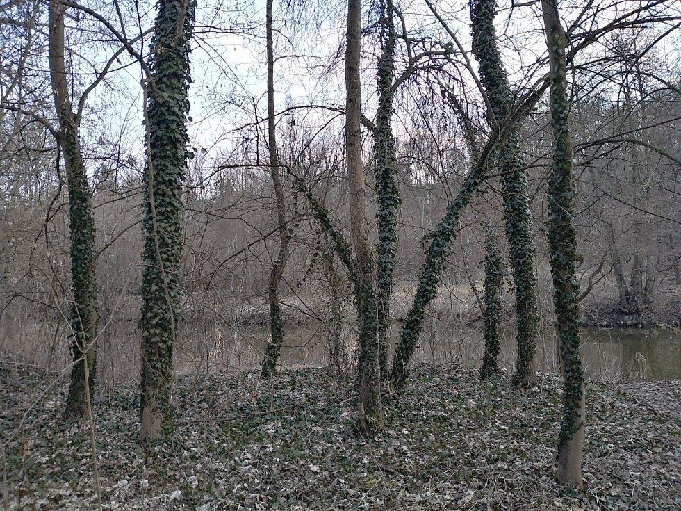 Stromy jsou pozoruhodné.