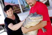 Karel Berousek mladší drží krokodýla, aby si ho redaktorka Helena Bauerová mohla pohladit.