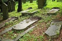 Povalené náhrobky na židovském hřbitově nad Loučimí.