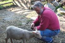 JIŘÍ KAISER Z PELECHŮ  má s chovem ovcí a s ním spojenou nekonečnou administrativou velké zkušennosti
