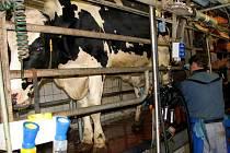 V DOJÍRNÉ. Až příští měsíce rozhodnou, jak na tom budou zemědělci produkující mléko. Ilustrační foto.