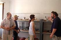 Největší zájem byl ve Staňkově o holuby a nutrie. Návštěvníkům vyprávěl zajímavosti ze života holubů člen staňkovské organizace Ladislav Klesa (zcela vpravo).