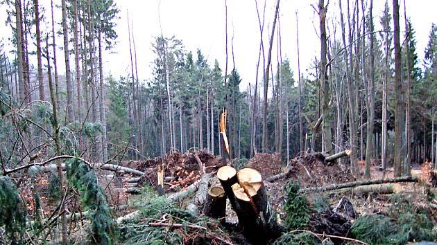 NĚMČICkÝ LES POD KORÁBEM. Zcela ve stejném místě jako vloni v lednu Kyrill napáchala letos velké škody v němčickém obecním lese jeho ´sestřička´ Emma.