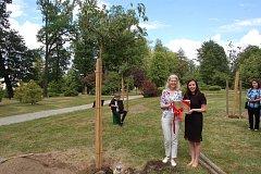 V poběžovickém parku byly vysazeny tři sakury v rámci akce 85 stromů pro Olgu Havlovou.