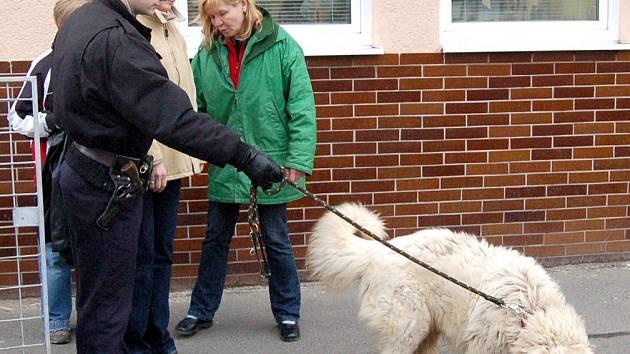 Vyděšený a zubožený pes, který zmateně pobíhal na hlavní silnici mezi Draženovem a Domažlicemi, najde svůj prozatímní domov v psím útulku na Valše u Domažlic