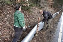Ochránci přírody umístili k silnici druhé třídy bariéru, aby ropuchy obecné nehynuly při migraci.