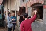 Finalistky soutěže Dívka Šumavy navštívily koňský útulrk v Mířkově.