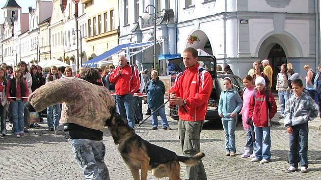 Mezi nejatraktivnější části programu patřilo vystoupení policejních psů.