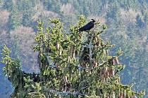 Příroda se během roku musí vyrovnat s nejednou nástrahou počasí. Snahou těch, kteří o lesy pečují, je zachovat v nich co nejvyváženější prostředí, které vyhovuje volně žijícím tvorům i rostlinám všeho druhu. Bez nich, zvířat a ptáků by les nebyl lesem.