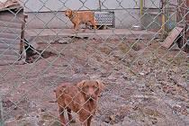 Malý zablácený dvorek a polorozpadlá boda je podle majitele psů Jiřího Knoppa z Chodova pro fenu a pěti štěňat chesapeake bay retrívra dostačujíci pro jejich chov. Zvířata jsou velice vystrašená a bázlivá.
