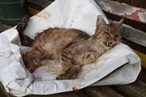 Mrtvá kočka Josefa Anděla.