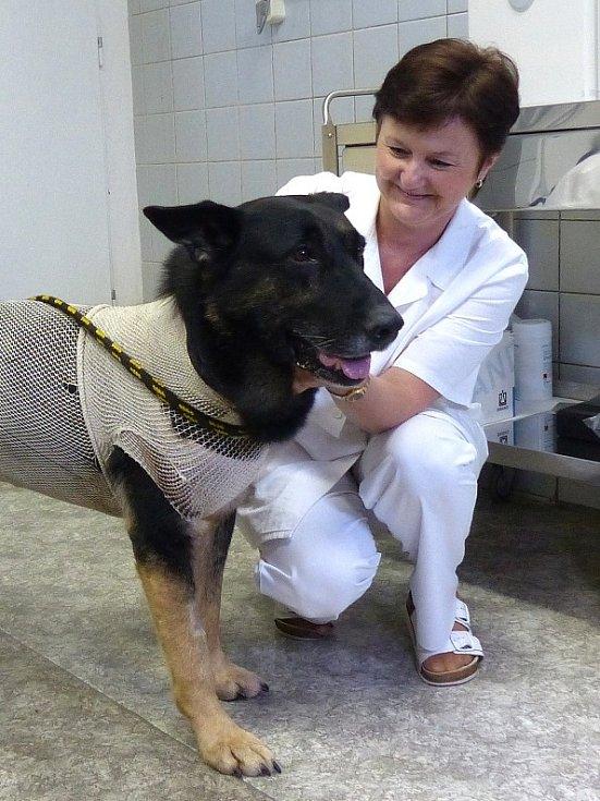 Zraněný německý ovčák Romer s psovodem Františkem Kohoutem ochotně pózovali médiím. Na psím hrdinovi bylo vidět, že není zcela v pořádku, ale i to, že je bezvadně vycvičený.