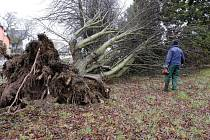 V Hluboké u Kdyně vítr vyvracel stromy.