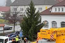 Stromek se nachází před radnicí.